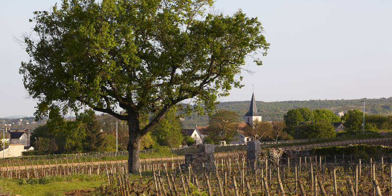 Pueblo de Chassagne-Montrachet  © Atelier photo Muzard
