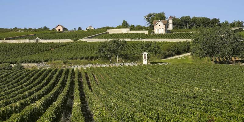 Viñas de Meursault
