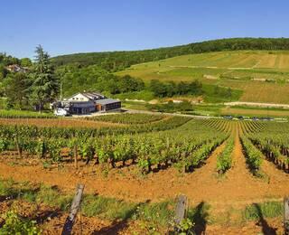 Los vinos de Borgoña