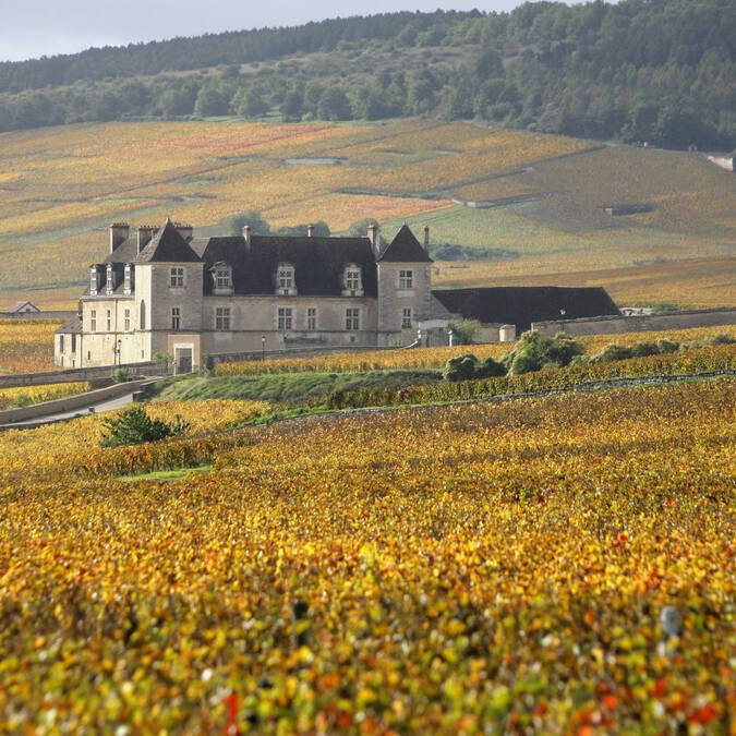 Clos de Vougeot,Vista de las viñas